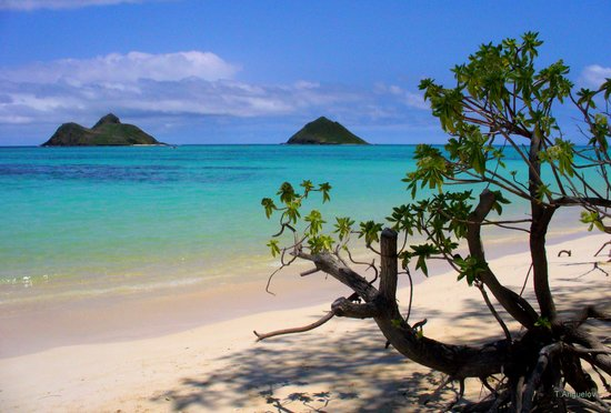 tr-hawaii.jpg