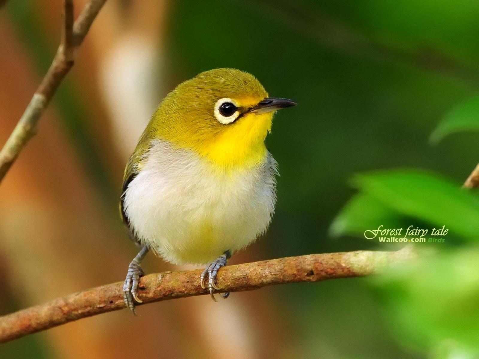 cute little yellow bird.jpg